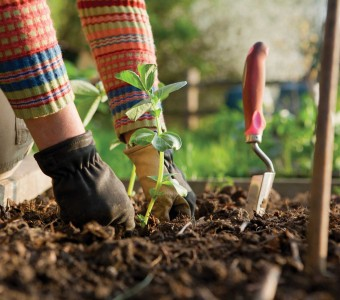 Stressed or Depressed? Gardening is the Best Answer for Your Question