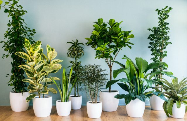 5 Indoor Plants To Beautify And Purify